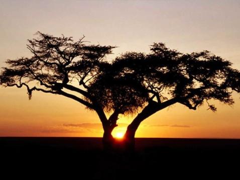 Zonsondergang natuurpark Ghana