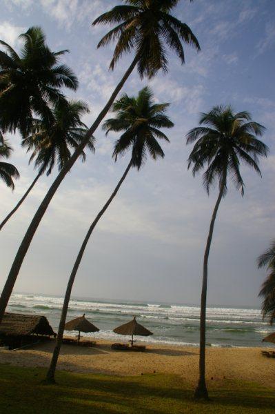 Palmbomen aan de kust van Ghana